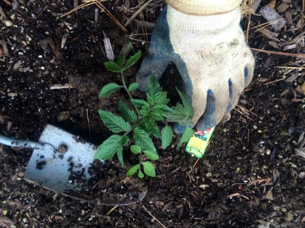 planting-garden-simple